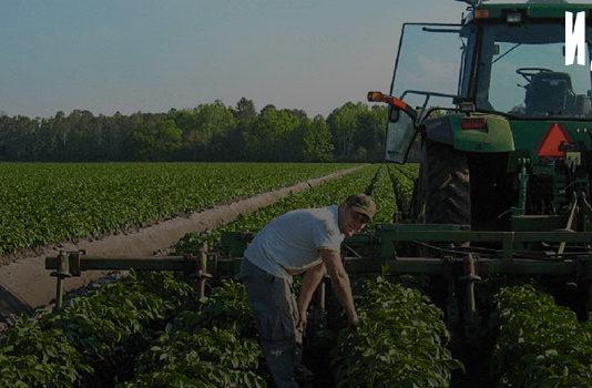 Производство экологически чистых продуктов питания